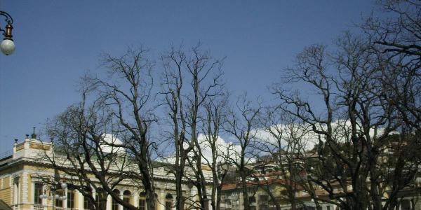 alberi a trieste - arbres a` trieste - trees in trieste